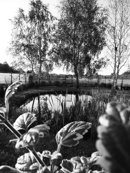 2. Patrycja Traska – Staw w Pustelniku – fotografia czarno-biała